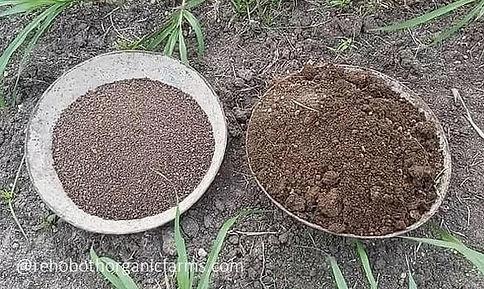 How to fertilize sorghum fodder.jpg