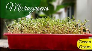 Microgreen Green Gram.jpg