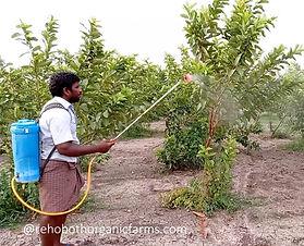 Guava Fertilizer.jpg
