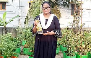 Banana Peel Fertilizer for Tomato plants1.jpg