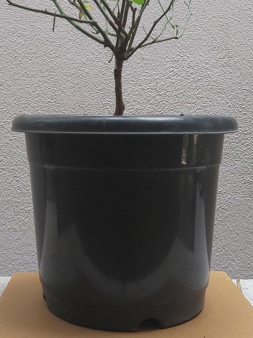 """Plastic Nursery Pots - 4"""""""