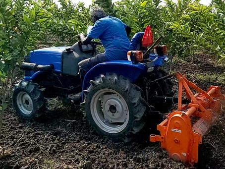Weeding work in Guava farm