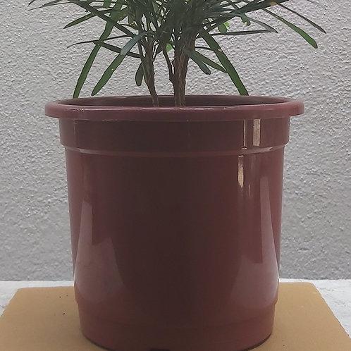 """Plastic Nursery Pot - 3"""""""