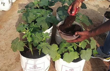 Fertilizer for Okra.jpg