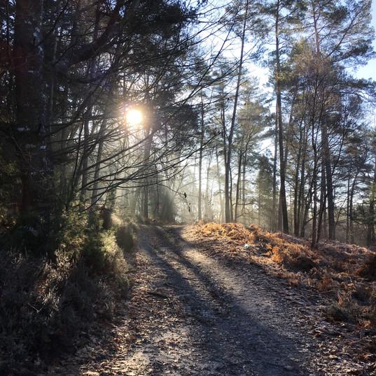 Soleil de forêt