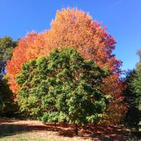 Arboretum de Boiscorde