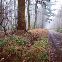 Forêt de Bellême