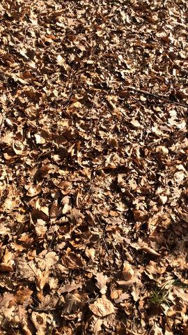 Zima bez snijega dok opalo lišće melodije piše