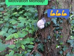 Inspiracija za ponedjeljak / Motivation Monday