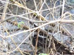 Žubori potok a zima još nije stigla, mali vodopad gleda u ravnicu i pravi slapove
