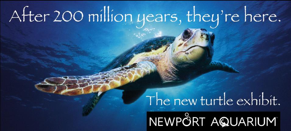 """Newport Aquarium """"Turtle Exhibit"""" Launch"""