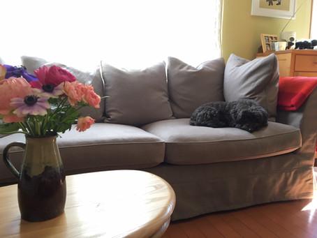 座り心地最高のもっちりソファ《Regent Klassik》