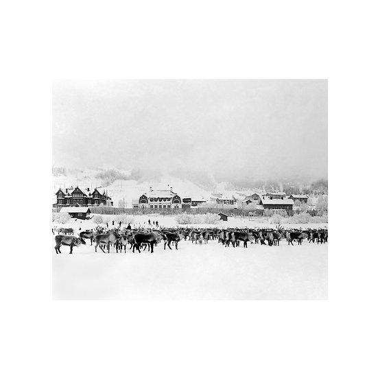 Poster Thomasson Renar på Åresjön