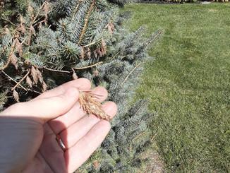 Cute mini pinecones?