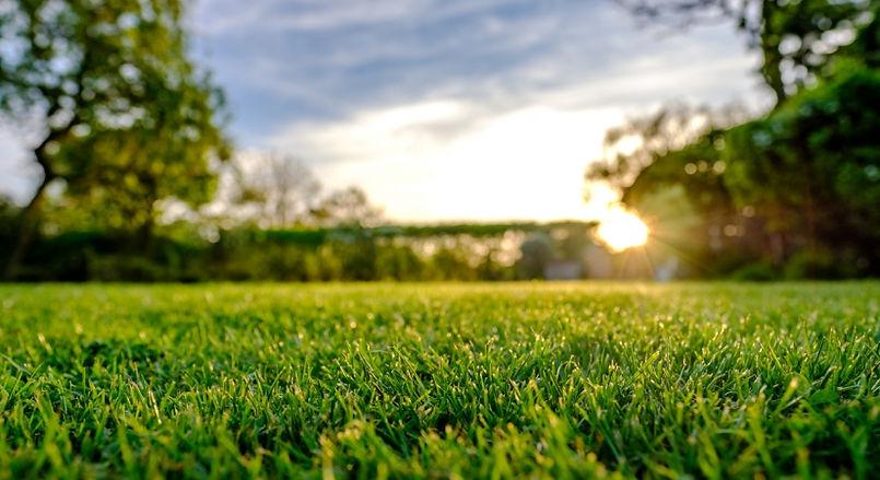 Lawn care medium-1.jpg