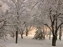 snow_neighborhood_woods_winter.jpg