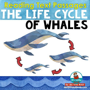 life cycle of a whale