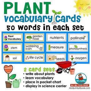 plants - vocabulary