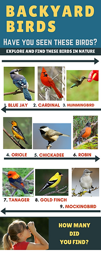 backyard birds, science for children, MrsQuimbyReads, teaching resources for science