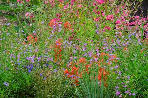 July talk: Developing a New Garden in Port Ludlow by Linda Cochran