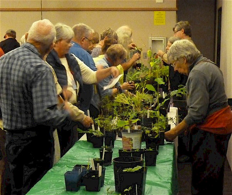 Plant sale at the October Meeting!