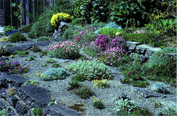 Dry Garden of Betty Lowry