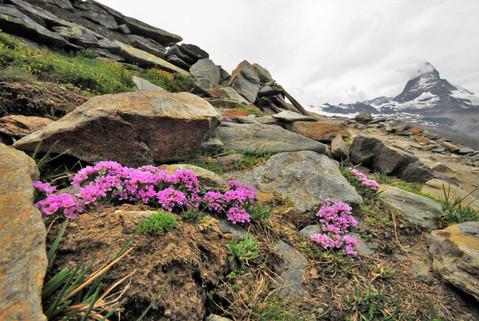 """April talk:  """"Compilation and Description of the Best Alpines of My Life"""" by Ger van den B"""