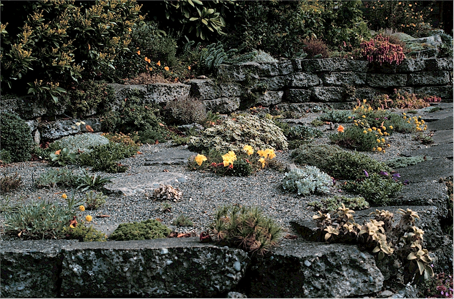 Dry Garden of Betty Lowry