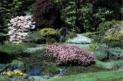 Front Garden of Betty Lowry