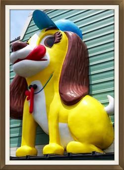 病院の看板犬です。病院前を通られる方には有名な看板犬です。