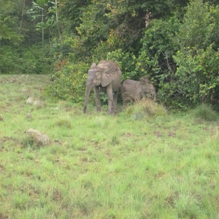 The wildlife is extraordinary. Elephants, panthers, colorful birds, monkeys and many others are frequent sightings if you venture into the jungle.
