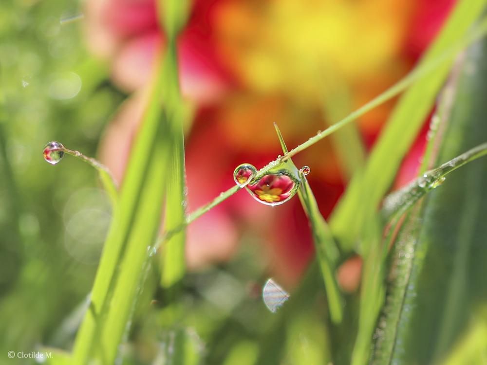 292. Spring frog