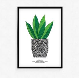 Aloe Vera - A5