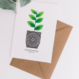 Ficus Elastica - A6
