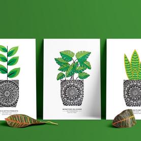 Three Plant Set - A5