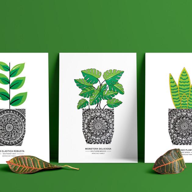 House Plant Set - A5