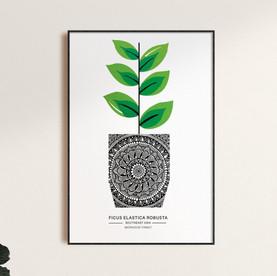 Ficus - A3