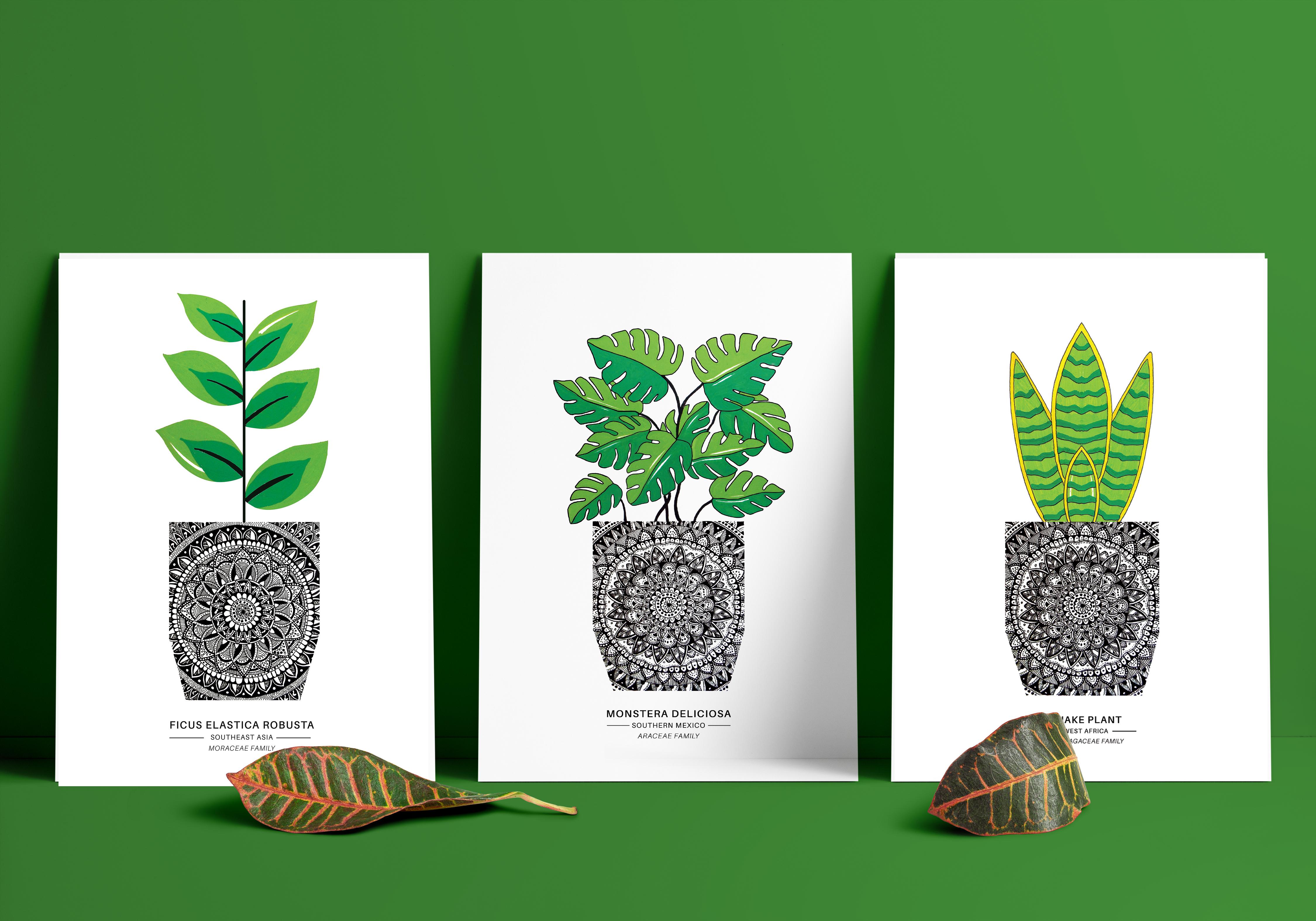Three plants imposed