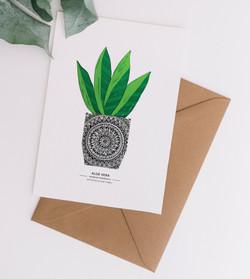 Card & Envelope Aloe