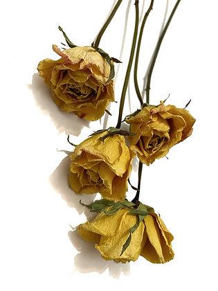 ורדים צהובים Large