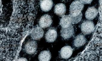 Understand COVID-19: Novel Coronavirus Mutations and Variants