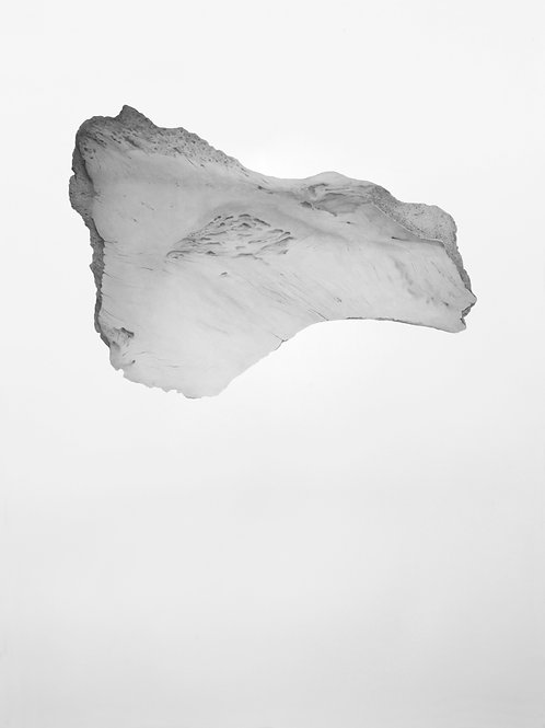 Fragmento óseo de ballena I