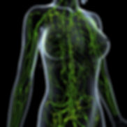 female-lymphatic-system-ray-anatomy-illu