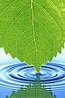 wellnes cultivation, wellbeing, whole health, healthy lifestyle, health discipline,