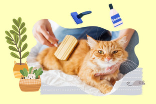 5 วิธีบำรุงขนแมวให้นุ่มสวยสุขภาพดี