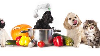 อาหารคน ที่สัตว์เลี้ยงห้ามกิน
