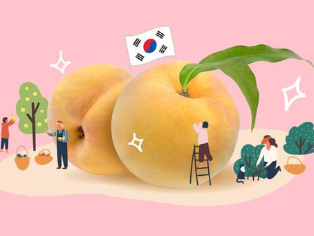 พีชเกาหลี อัญมณีแห่งผลไม้