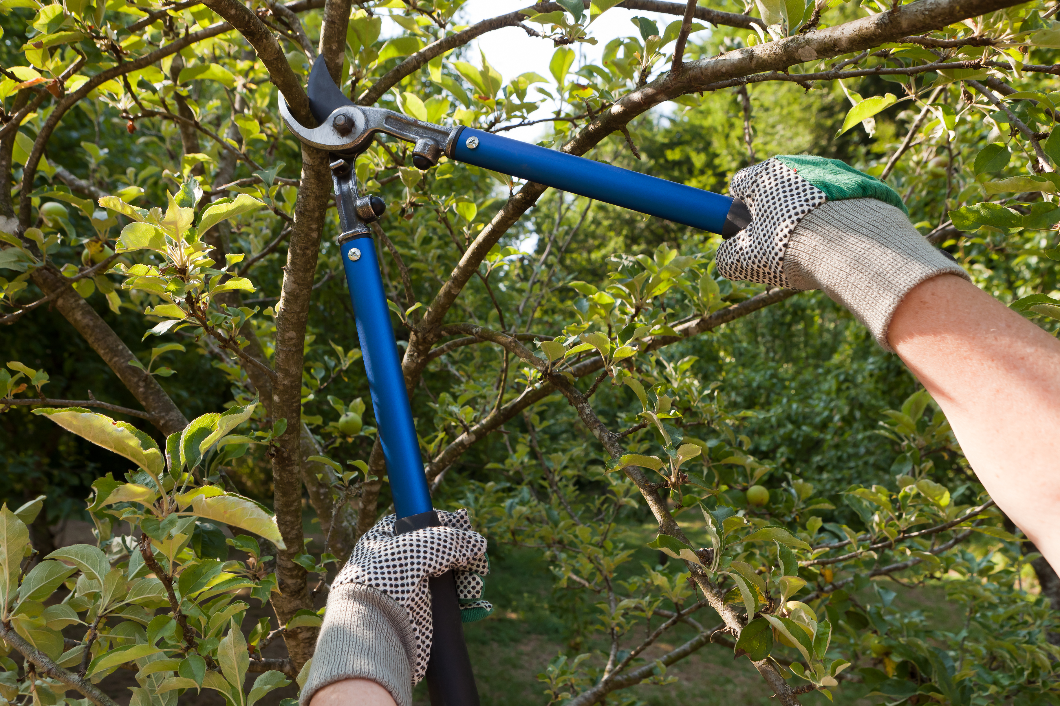 Pruning | Tree Service
