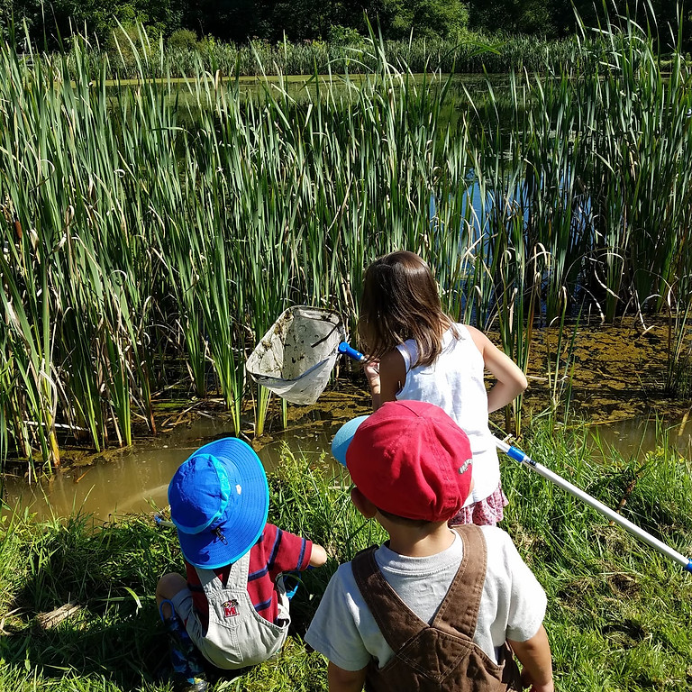 Bioblitz at Charlotte's Quest in Pine Valley Park