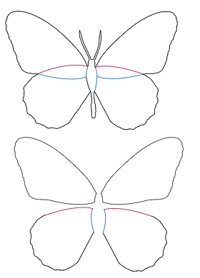 butterflyoutline.png